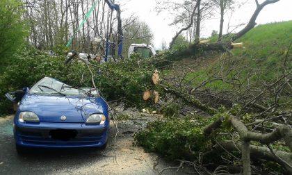 Abbattono albero: cade su auto, 74enne ferita