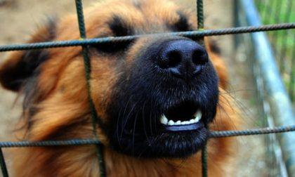 Uccise il cane del vicino facendogli mangiare noci: condannato a 1 anno