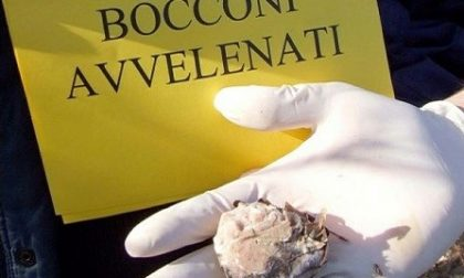 Bocconi avvelenati in corso Italia