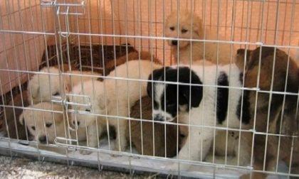 Maltrattarono 20 cuccioli: condannati dal Tribunale di Vercelli