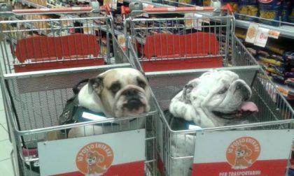 Da oggi a Torino divieto di cani all'interno dei supermarket
