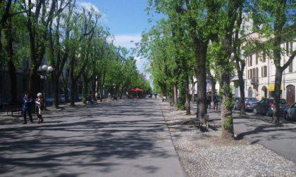 Festa Popoli 2019: gli alberi che camminano