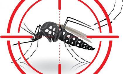 Zanzara tigre a Vercelli: è invasione
