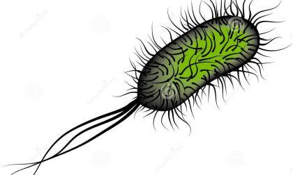 E-coli nell'acqua a Olcenengo
