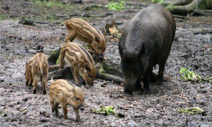 """Coldiretti: """"Velocizzare i risarcimenti per danni da animali selvatici"""""""