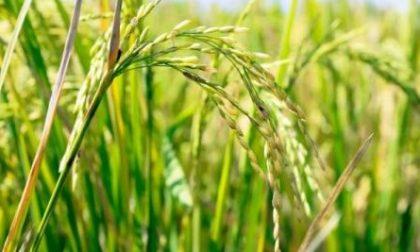 Danni all'agricoltura causati dal maltempo: aperte le segnalazioni