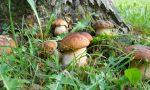 Funghi sicuri: il servizio dell'Asl