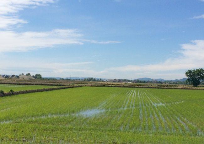 Confagricoltura Piemonte: facciamo squadra per valorizzare il riso italiano