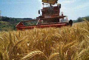 Agricoltura e covid19: al via i contributi per lavorazione e vendita dei prodotti