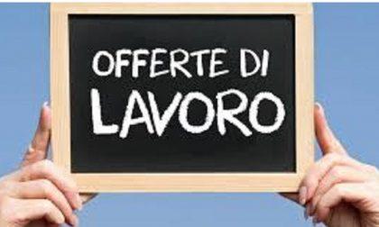 OFFERTE DI LAVORO AGGIORNATE