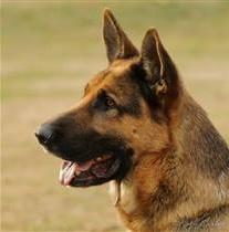 PIEMONTE: Cane salva il padrone dopo l'incidente