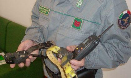 CRONACA: addestrava il cane con scosse elettriche. Denunciato un uomo