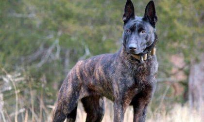 PIEMONTE: Uccide cane con un colpo di pistola