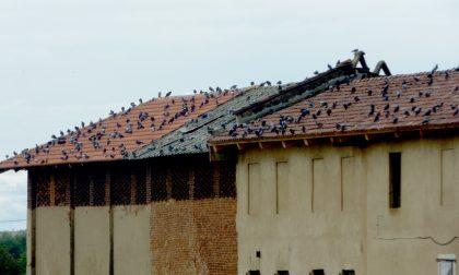 Fino a 500 euro di multa a chi sfama i piccioni
