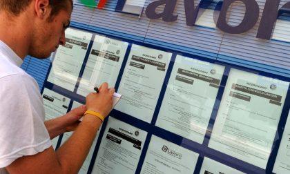 Offerte Lavoro Vercelli: timida ripresa del mercato