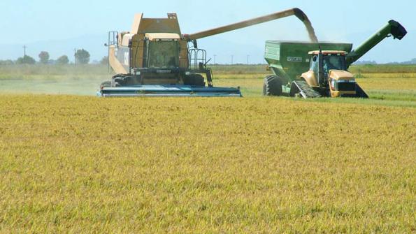 Vendere riso ai cinesi ora diventa possibile