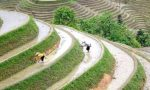 """Ente Risi: """"Ora dazi sul riso japonica della Birmania"""""""