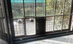 Gattile a soqquadro: scatta l'emergenza gatti fuggiti