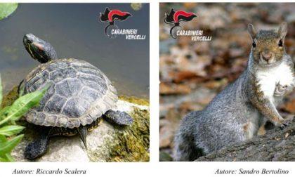 Carabinieri Forestali: termini per denunciare animali esotici