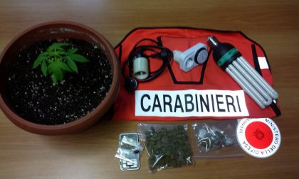 Serra per cannabis in casa: arrestato