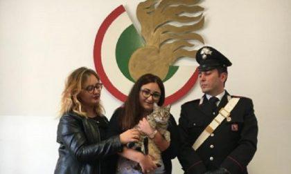 """Arrestata per estorsione: """"Rivolete il gatto? Datemi 300 euro"""""""