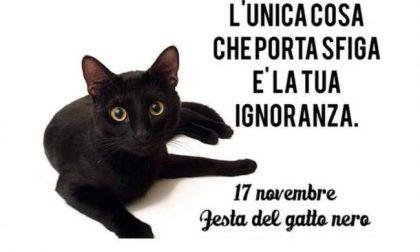 Domenica 17 novembre: è la festa del gatto nero