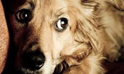 Raccolta alimentare per gli animali abbandonati con NovaCoop