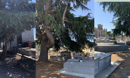 Cimitero Vercelli: alberi pericolosi, il pd interroga il Sindaco