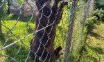 Gatto impiccato a Balzola: la denuncia della LNDC