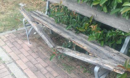 """Panchine rotte o """"inghiottite"""" dalla vegetazione"""