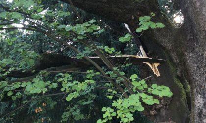 Ramo pericolante nei giardini della Basilica Sant'Andrea