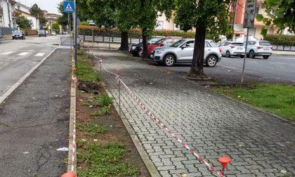 Nuovi alberi in piazza Aldo Moro e via Dante