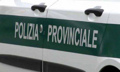 Cavatori clandestini denunciati a Borgo d'Ale