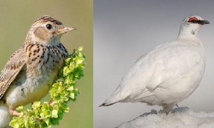"""La Lac: """"7 specie di uccelli condannate a morte dalla Regione"""""""