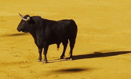 Giallo insegnante uccisa: si fa strada l'ipotesi di un toro
