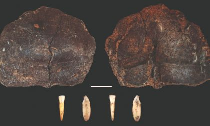 Neanderthal in Valsesia: nuove scoperte alla Ciota Ciara