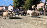 Sciolto il voto a San Vittore, prima volta in autunno