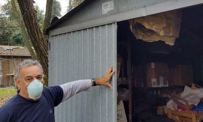 Scopre un mostruoso nido di calabroni nel capanno: LE FOTO