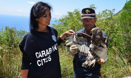 Presentato il calendario dei Carabinieri Cites 2021