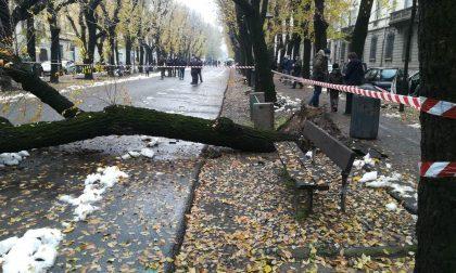 Ennesimo albero schiantato, è un problema serio