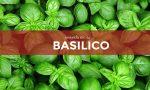 Tutti ortisti: in edicola con Notizia Oggi Vercelli i semi di basilico