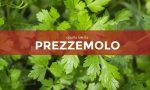 Tutti ortisti: in edicola con Notizia Oggi Vercelli i semi di prezzemolo