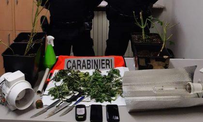 Saluggia, coltivava marijuana in casa: denunciato