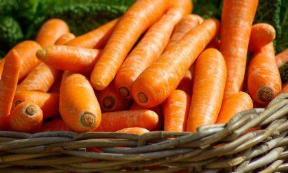 In regalo con il giornale i semi di carota