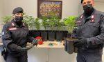 Aveva una serra di marjuana in casa: 30enne vercellese arrestato
