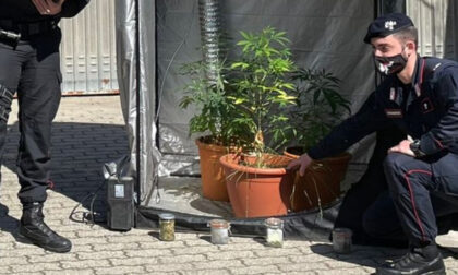 Coltivava marijuana in garage: 20enne di Gattinara nei guai