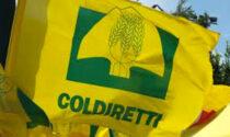 Coldiretti Vercelli-Biella: operazione di solidarietà per le famiglie in occasione della Pasqua
