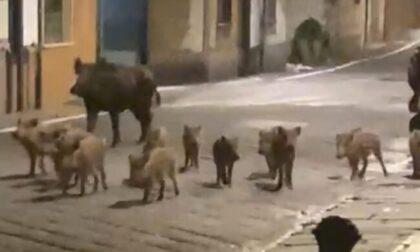 Animali selvatici: un pericolo costante