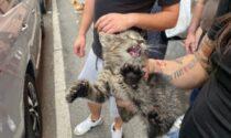 I miagolii di felicità del gattino salvato, intrappolato nel motore