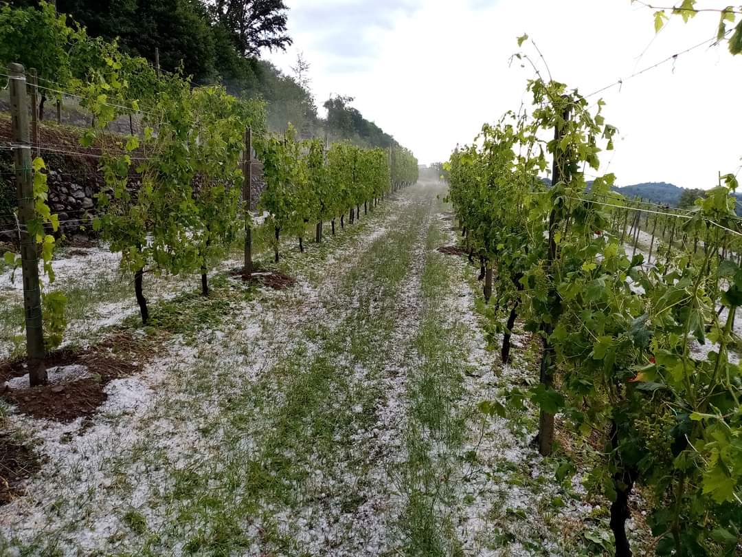 Grandine: tanti i danni alle colture a Viverone